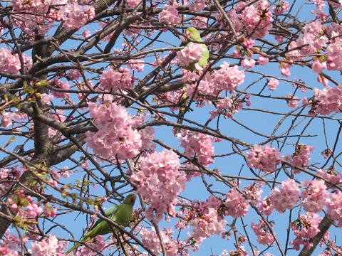 Sakura090319